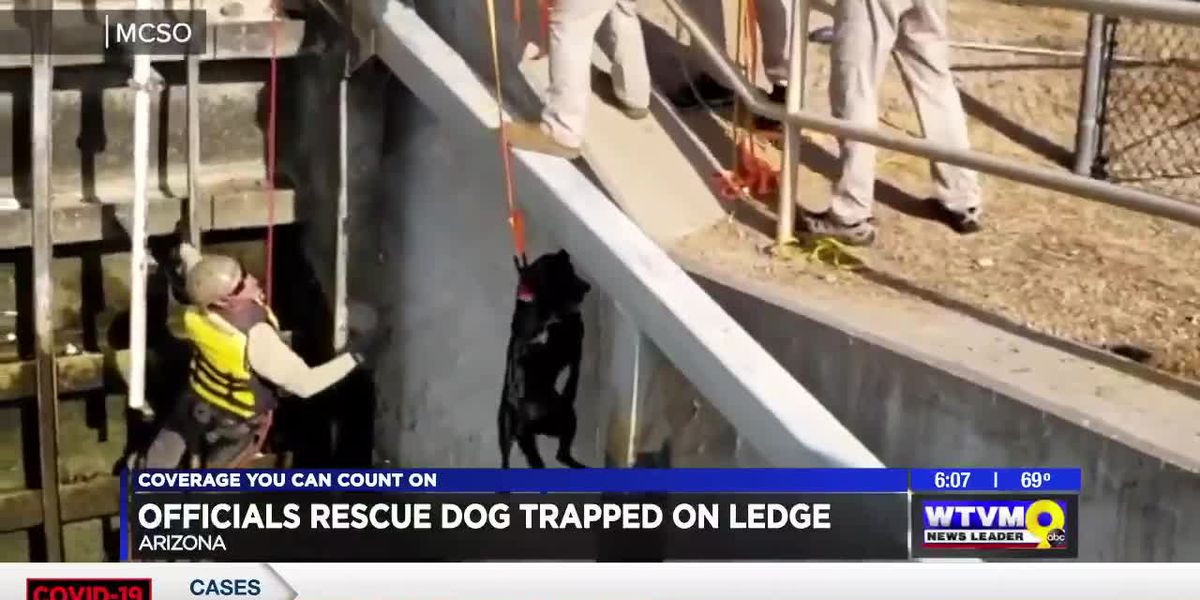 Power of Goodwill: Officials rescue dog trapped on ledge