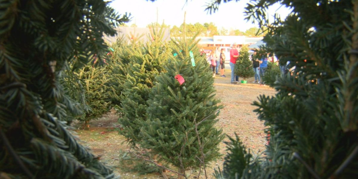 Christmas tree shortage stems back to 2008 housing crisis