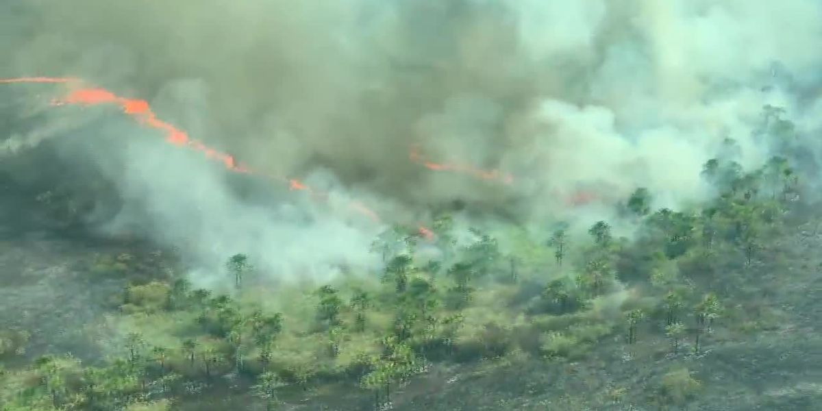 Hundreds of acres of Amazon on fire in environmental crisis