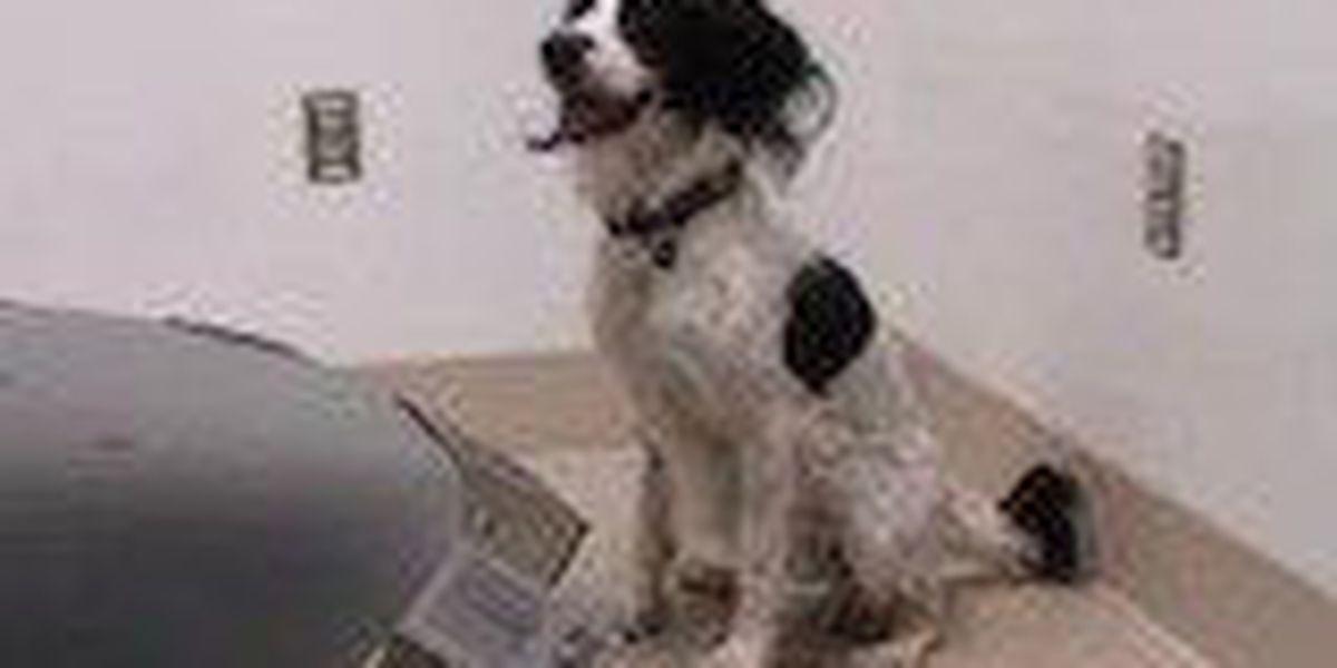 Dog sniffs out ovarian cancer