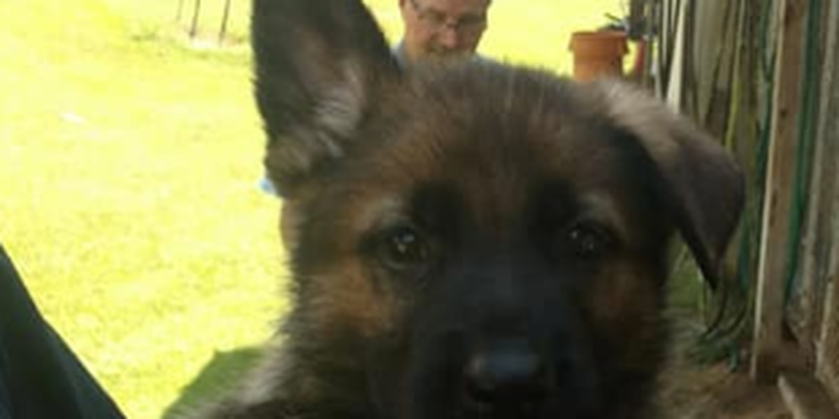 Eufuala Police Department's K-9 Unit is asking for name suggestions for its newest members