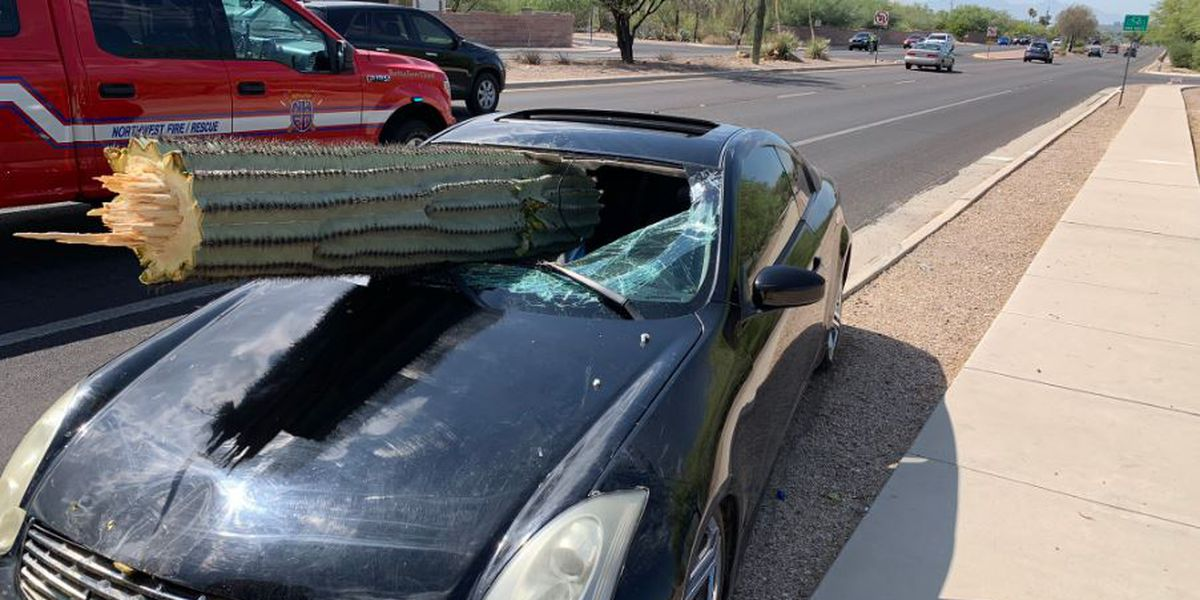 STICKY SITUATION: Crash leaves large cactus sticking out of vehicle's windshield
