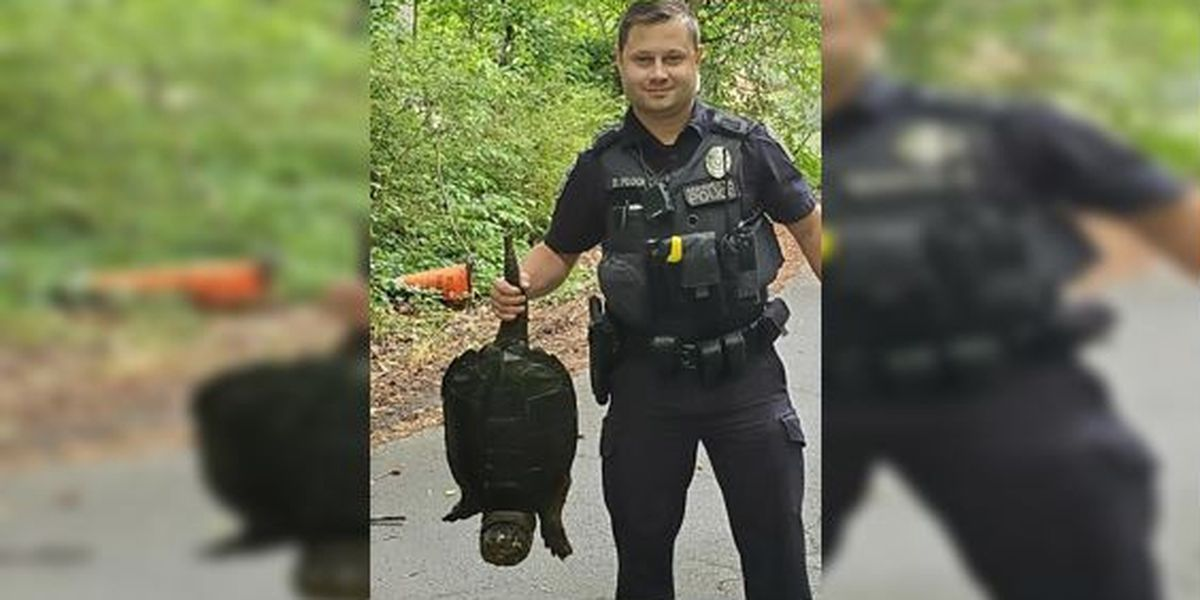 Officer apprehends snapping turtle: It's quite a tale