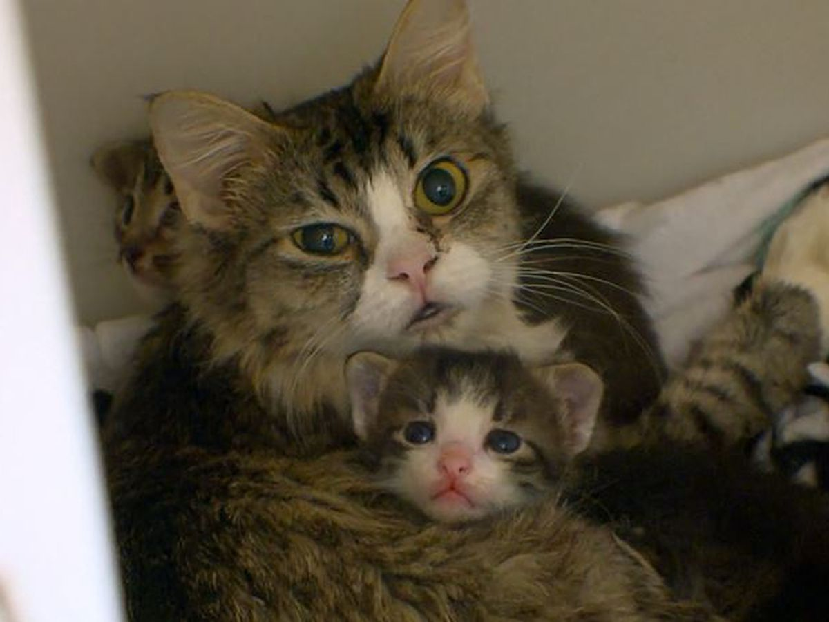 Woman caught with 26 cats in her apartment; she threw some out window