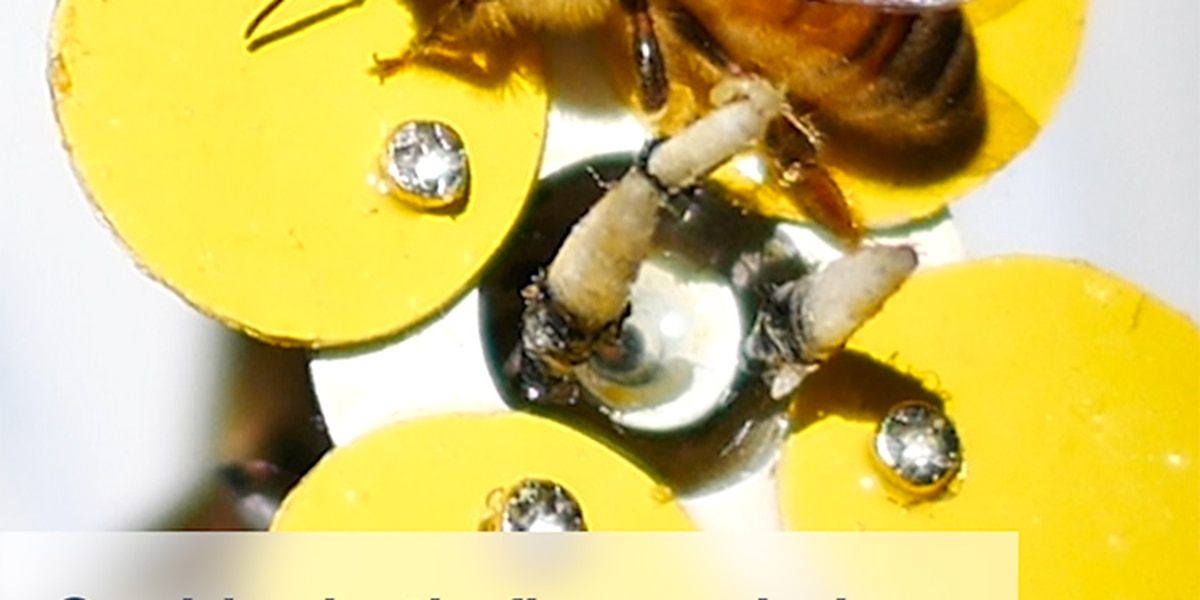 Could robotic flowers help bees make a comeback?