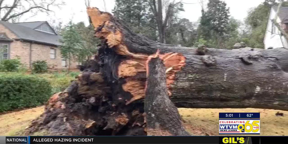 City of Columbus suspends Tree for Fee services due to widespread storm damage