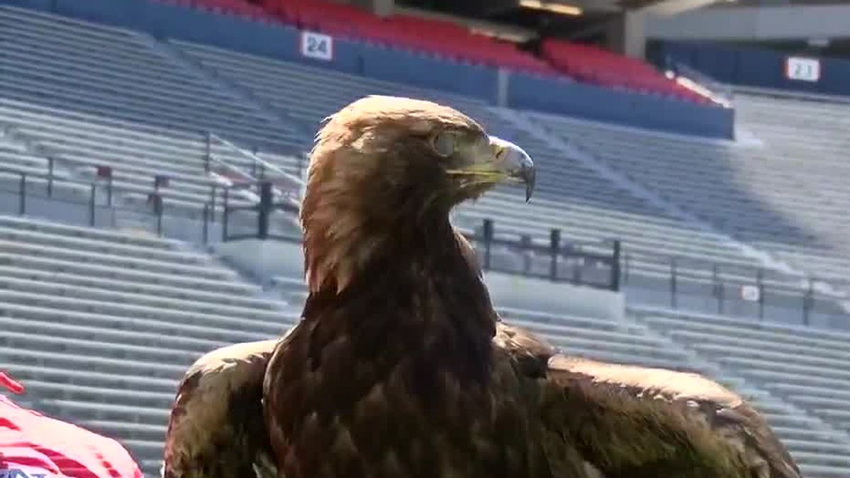 Southeastern Raptor Center preps for beloved Auburn eagle flight tradition