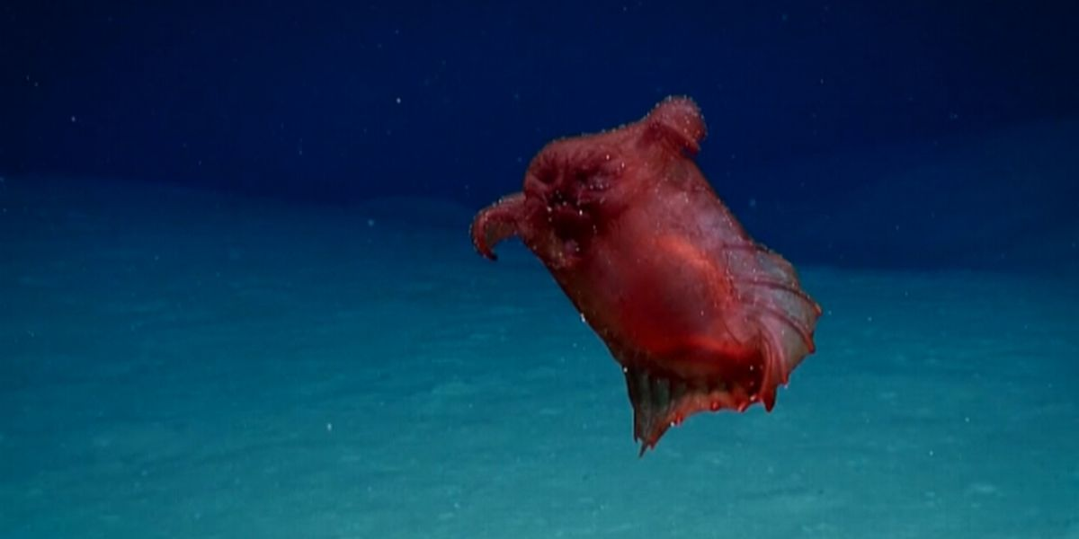 Bizarre 'headless chicken monster' spotted swimming in deep waters off east Antarctica