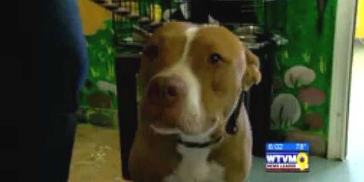Dog shot after armed robbery incident needs new home