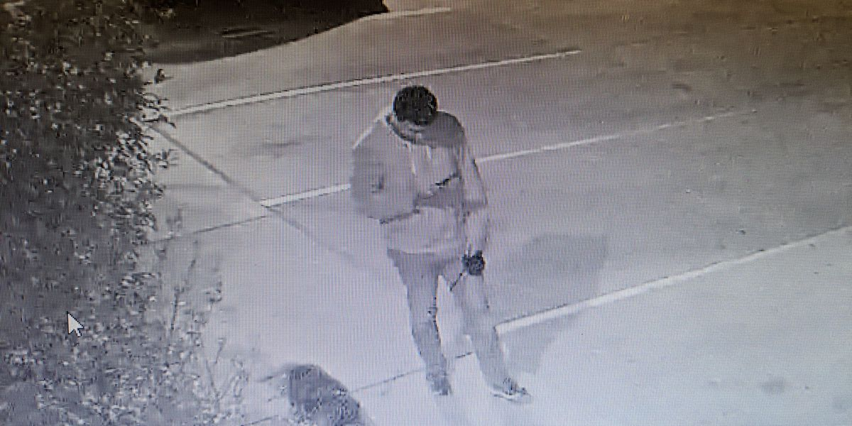 Suspect wanted in Auburn for vandalizing and abandoning dogs at Lee County Humane Society